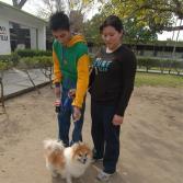 Carrera con mascotas