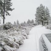 Cae nevada en la Sierra de San Pedro