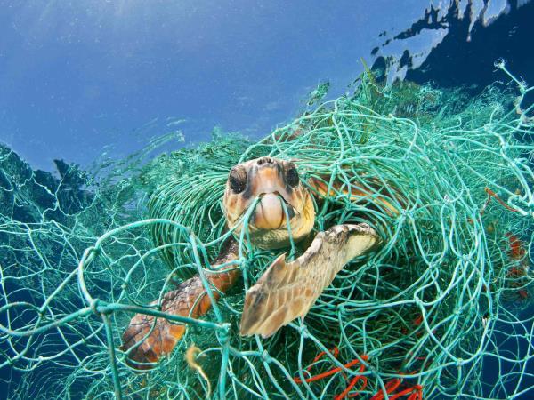 WWF pide declarar emergencia planetaria