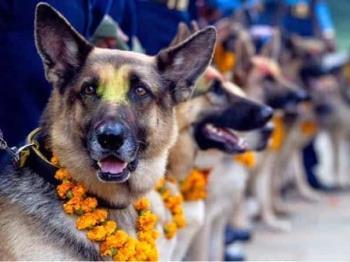 Festival en Nepal en agradecimiento a los perros por su lealtad
