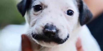 Cachorro sin hogar nace con bigote