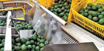 Violencia en Michoacán podría frenar exportación de aguacate