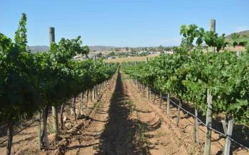 Impulsará Secretaría del Campo la creación de padrón de exportadores de vino de BC