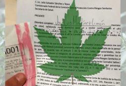 AMLO respetará fallo de SCJN sobre marihuana
