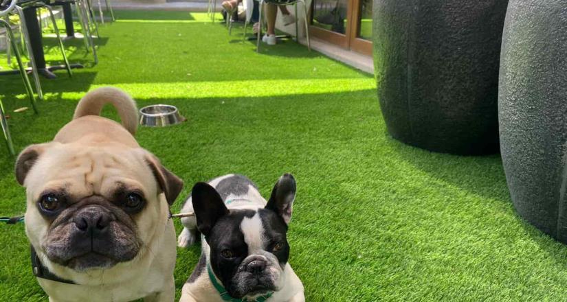 "Detonan nuevos conceptos de cafeterías ""Pet Friendly"" en Tijuana"