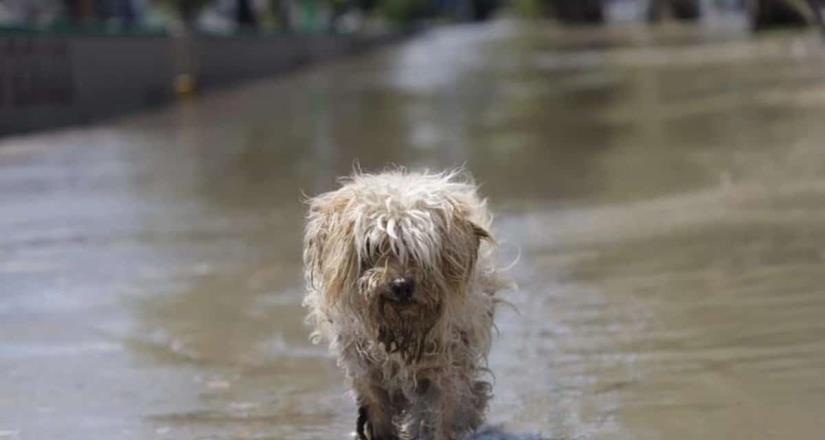 Inundación en Tula también afectó a los animales.