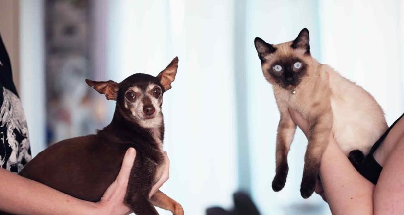 Mascotas no contagian a humanos de Covid: UNAM