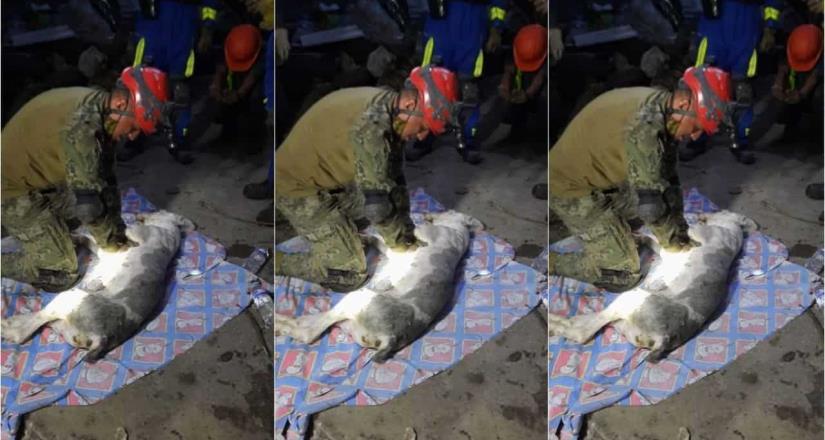 Marino intenta reanimar a perro rescatado del Chiquihuite