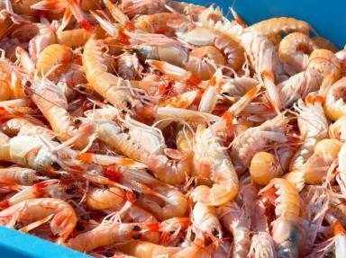 México recupera certificación para exportar camarón a EU